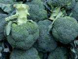 鄭州新鮮綠色蔬菜集裝箱