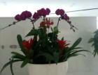 天津办公室花卉租赁公司 绿植养护公司