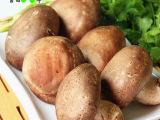 批发基地自产新鲜香菇 野生香菇 纯天然香菇 新鲜有机无公害蔬菜