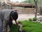 新疆干红辣椒。