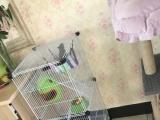 魔王松鼠出售