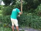 龙岗修剪枝叶 砍树公司 专业人员 专业工具 金速来价格实惠