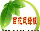 南京百花茂花卉租赁,绿植盆景出租,室内植物租赁