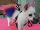 大连狗狗美容宠物美容师培训招生连锁加盟企业