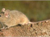 龙泉灭鼠公司 龙泉杀虫公司 龙泉白蚁防治公司