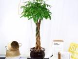 雄安新区绿植养护公司免费设计方案卖绿植
