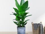 番禺植物出租 番禺植物销售 番禺植物租赁