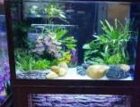 广州佛山专业清洗鱼缸鱼池过滤池升级防治鱼病