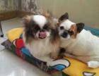 永宁猫咪狗狗宠物寄养托管一犬一舍长期优惠可接送宠物