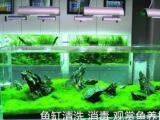 北京上门鱼缸清洗、养护、造景维修订制一站式服务