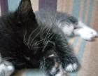自家小猫生的希望找个好人家,必须善待
