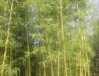 北京房山苗圃苗木价格完善的售后服务