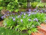 順義庭院綠化