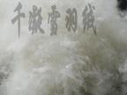 千凝雪羽绒 国标50%水洗普白鸭绒高蓬松度 50羽绒 朵大毛长