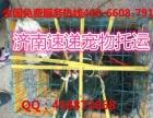 济南机场宠物单独飞价格300起 方便快捷 省心