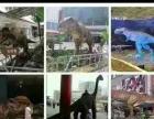 大黄鸭麦兜胡桃夹子香港木马恐龙变形金刚等仿真模型