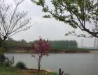 朱苍镇上石河西坝子 土地 水库葡萄30亩平米