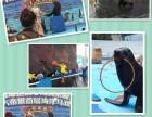 海狮海豹表演