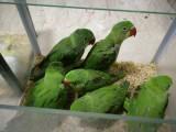亞歷山大鸚鵡 和尚鸚鵡 金太陽鸚鵡 鷯哥 小太陽鸚鵡 灰鸚鵡