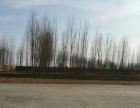 辛立庄镇鸣鸡村 大院15亩,廊涿高速东湾下口,有车间