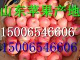 山东苹果批发价格丹阳红将军苹果基地