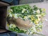 昆明宠物后事处理-宠物殡葬-宠物火化-宠物安乐