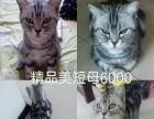 便宜出售家里所有猫咪一共11只