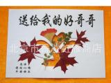 香山红叶 红叶书签 枫叶叶脉书签 天然工