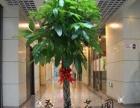 求购茂盛的大型发财树