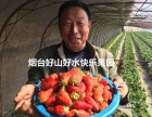 烟台生态草莓 生态苹果干 生态苹果,现寻求水果销售代理合作