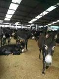 肉驴的价格 驴苗多少钱