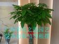 广州办公室植物租赁花草出租暑假价格大放低抵来