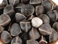 野生辣木籽的价格是多少(今年产地报道)