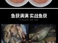 龙王恨大野战蓝鲫香腥搓拉野战蓝鲫300g鱼饵渔具