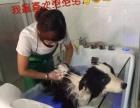 玉林爱犬宠物医院