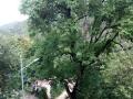低价转让300亩山地及林木