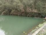 杭州临安西天目200亩林地转让