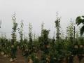 襄城往隆中大型农家生态庄园转让,已成熟可直接盈利