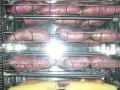 盘锦烤红薯机 盘锦自动烤地瓜机 燃气旋转烤地瓜机设备