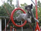 家宝训犬学校,犬业协会指定训犬基地,有保障