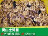 广西土鸡苗批发-供应广西优惠的贵州土鸡苗
