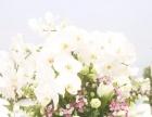 想拥有和霍建华林心如一样的户外草地草坪婚礼吗?