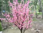 北京仿真树 来图定做 现场制作专业团队设计制作