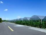 集士港湖泊河80亩设施完善的田丽农场寻求有实力的合作伙伴