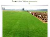 北京園林綠化公司銷售冷季型草坪帶土草卷高羊茅早熟禾混播草皮