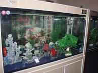 观赏鱼专业治疗 鱼缸专业清洗 鱼缸专业造景 鱼缸专业维修