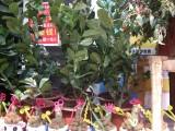 鄂州室内绿植维护