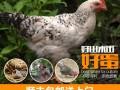 木几有机柴鸡蛋30枚 有机认证 新鲜土鸡蛋笨鸡蛋