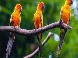 开县本地出售观赏鸟健康保障