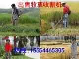 【皇竹草种子】昭通皇竹草种子价格走势